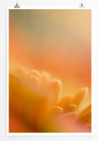 Poster Orange Blütenblätter von einer Sonnenblume