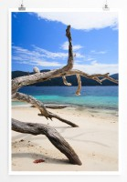 Poster alter Baum am Strand