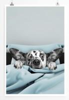 Poster Dalmatiner im Bett