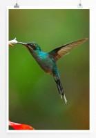 Poster Kolibri auf Nektarsuche