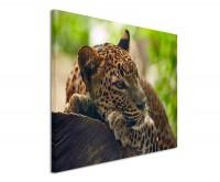 Premium Leinwandbild Jaguar auf Baum