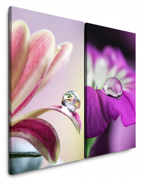 2 Bilder je 60x90cm Blumen Wassertropfen Blüten Viellot Makro Sommer Makrofotografie
