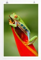 Poster Rotaugenlaubfrosch auf roter Blume